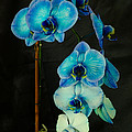 Mystique Blue Orchids by Donna Brown