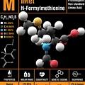 N-formylmethionine Amino Acid Molecule by Carlos Clarivan/science Photo Library
