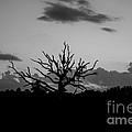 Naked Tree by Mina Isaac