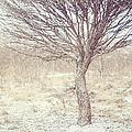 Naked Willow Tree. Winter Poems by Jenny Rainbow
