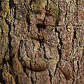Naked Wood Nymph by John Haldane