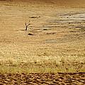 Namibian Desert Scene 1 by Marc Levine