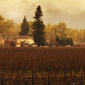 Napa In The Fall by Lee Jorgensen