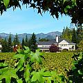 Napa Valley Duckhorn Winery by Jeff Lowe