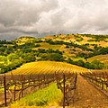 Napa Vineyard by Mick Burkey