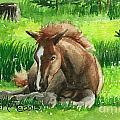 Napping Alberta Wild Foal by Linda L Martin