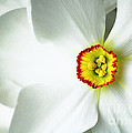 Narcissus by Andy Readman