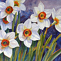 Narcissus Daffodil Flowers by Janet Zeh
