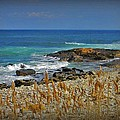 Narragansett Rocky Shore by Diane Valliere