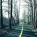 Narrow Path by Mary Cloninger