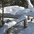 Narrow Trail by Joseph Yarbrough