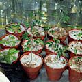 Nasa Germ Free Plant Research by Nasa