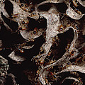 Nasute Termite Nest Amazonian Peru by Mark Moffett