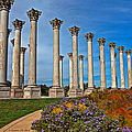 National Capitol Columns by Suzanne Stout