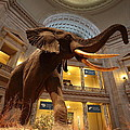 National Museum Of Natural History by Scott Fracasso