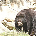 National Zoo - Bear - 12121 by DC Photographer