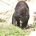 National Zoo - Bear - 12123 by DC Photographer