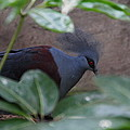 National Zoo - Birds - 011329 by DC Photographer