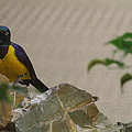 National Zoo - Birds - 01137 by DC Photographer