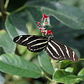 National Zoo - Butterfly - 12121 by DC Photographer