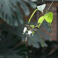 National Zoo - Butterfly - 12124 by DC Photographer