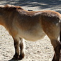 National Zoo - Donkey - 01134 by DC Photographer