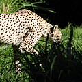 National Zoo - Leopard - 011311 by DC Photographer
