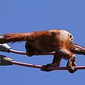 National Zoo - Orangutan - 011317 by DC Photographer