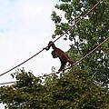 National Zoo - Orangutan - 01135 by DC Photographer