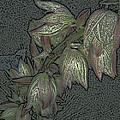 Native Plant 1 by Lovina Wright