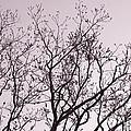 Native Texas Pecan Silhouette by Connie Fox