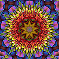 Natural Attributes 17 Square by Wendy J St Christopher
