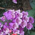 Natural Bouquet Bunch Of Spiritul Purple Flowers by Navin Joshi
