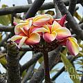Natural Bouquet  by Mindy Sue Werth