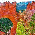 Natural Bridge In Bryce Canyon National Park-utah  by Ruth Hager
