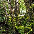 Natural Emeralds. I Wicklow. Ireland by Jenny Rainbow