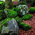 Natural Emeralds. Wicklow. Ireland by Jenny Rainbow