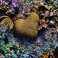 Natural Heart by Peggy Hughes