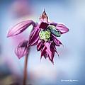 Natural Bug Life by Stwayne Keubrick