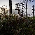 Natural Network by Jouko Lehto