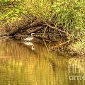 Natural Reflection by Traci Law