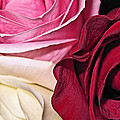 Natural Roses by Nereida Slesarchik Cedeno Wilcoxon