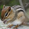 Naturally Cute by Susan Herber