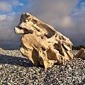 Naturally Sculpted Waterworn Wood On Pebble Beach by Stephan Pietzko