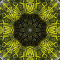 Caleidoscope - Green Leaves by Janos Szabo