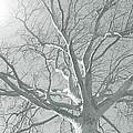 nature - art - Winter Sun  by Ann Powell