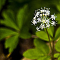 Nature Celebrates Spring With A Burst Of Botanical Fireworks by LeeAnn McLaneGoetz McLaneGoetzStudioLLCcom