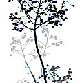 Nature Design Black And White by Ann Powell