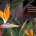 Nature Does Not Hurry Bird Of Paradise by Thomas Woolworth