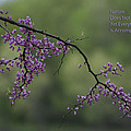 Nature Does Not Hurry Blossoms In Purple by Thomas Woolworth